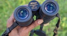 Nikon Monarch 5 8x42 Binoculars featured image