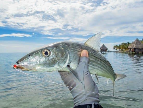Bonefish saltwater fly fishing