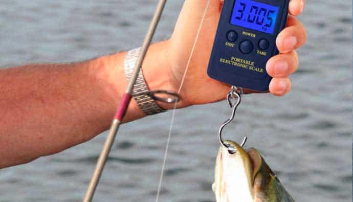 best digital fish scale guide