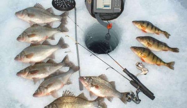 ice fishing fish species