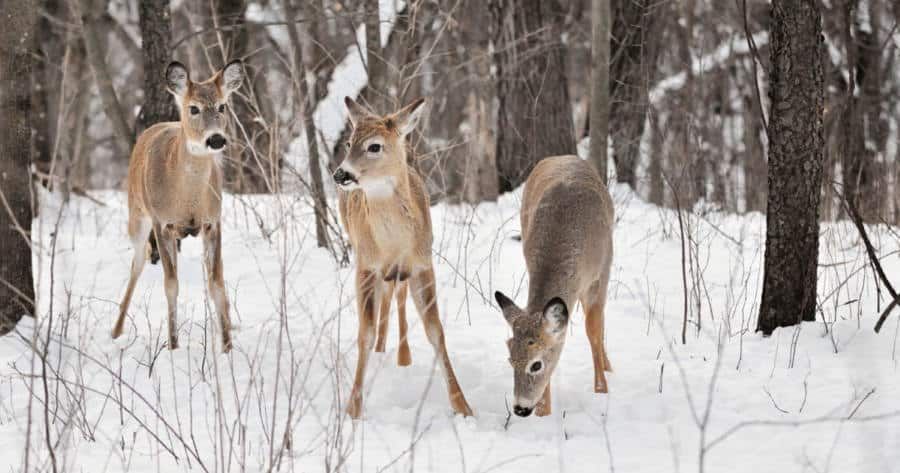 10 deer hunting tips - Use the Weather